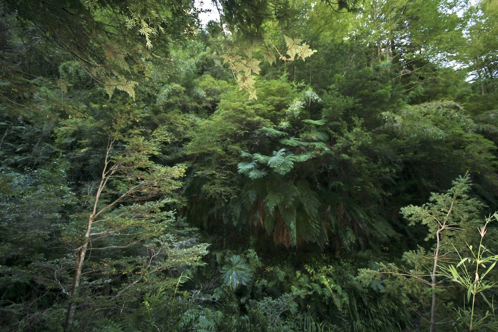 The lushness of the temperate rainforest